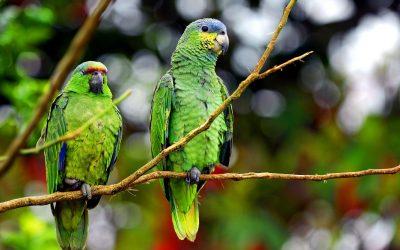 Amazonia Photo Gallery