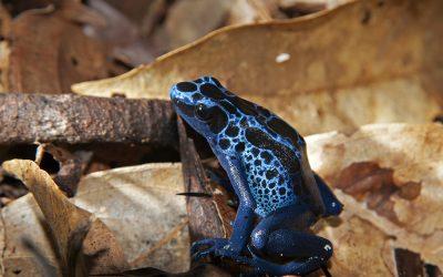 The Regional Program of Biological Diversity for the Amazon Basin/Region