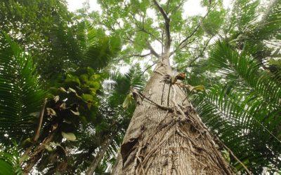 Projeto Monitoramento da Cobertura Florestal na Região Amazônica / Monitoramento do Desmatamento, Aproveitamento Florestal e Mudanças no Uso da Terra na Floresta Pan-Amazônica