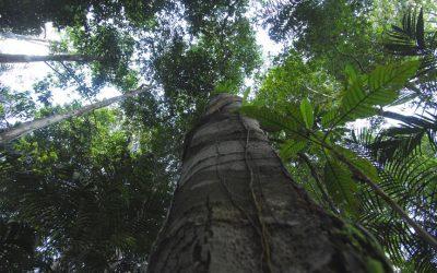 OTCA implementará Programa Regional de Diversidade Biológica para a Bacia/Região Amazônica