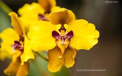 Equador gera proposta para o fortalecimento da cadeia de valor das orquídeas na região amazônica (Napo, Morona Santiago e Zamora Chinchipe)