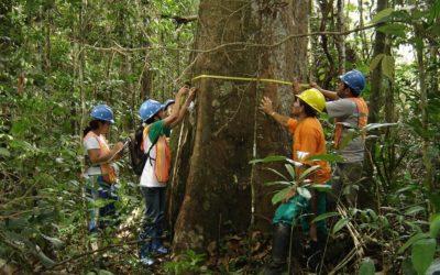 Proyecto Monitoreo entregará tercer Mapa Regional de la Deforestación Amazónica 2013-2014