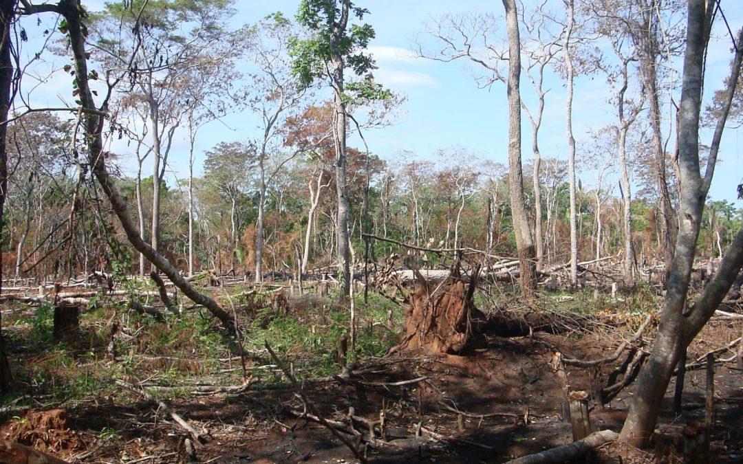 La OTCA y la FAO trabajarán en las áreas afectadas por los incendios forestales en la Región Amazónica