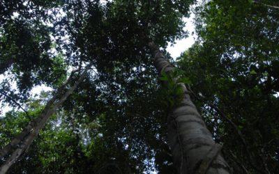 OTCA implementará Programa Regional de Diversidad Biológica para la Cuenca/Región Amazónica