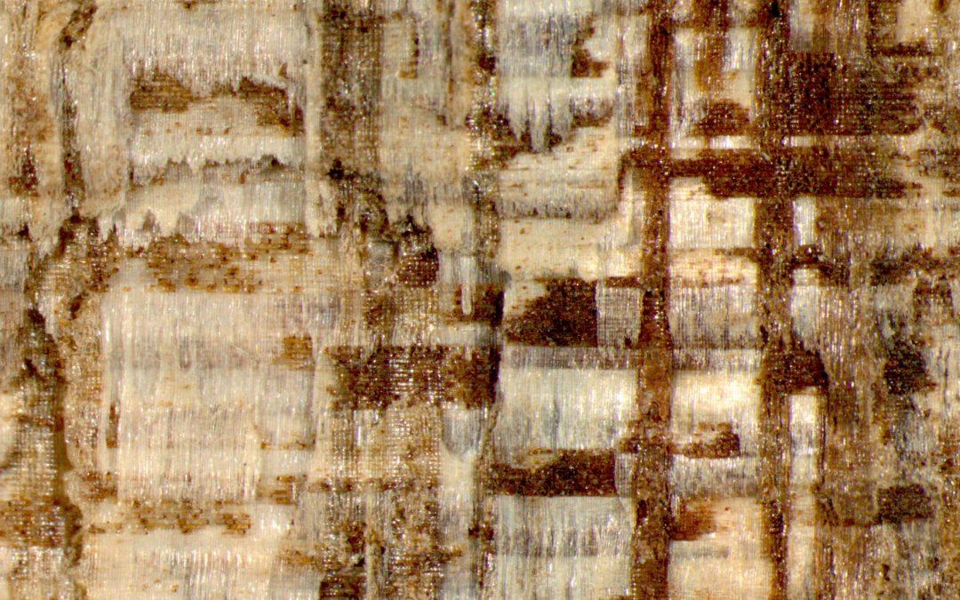 El Laboratorio de Productos Forestales ofrece un nuevo sistema de identificación de la madera en Internet