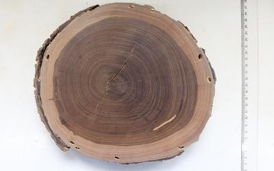 El Laboratorio de Productos Forestales y el Jardín Botánico de RJ publican en Internet los datos de colecciones de madera